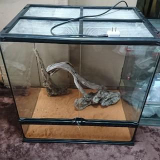 エキゾテラ グラステリウム6060(爬虫類/両生類用品)