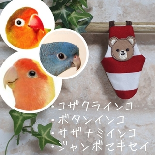 【新品】くまちゃん ベアー ボーダー バードスーツ フライトスーツ コザクラ等(鳥)