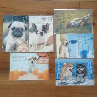 犬 ポストカード 6枚セット(写真/ポストカード)