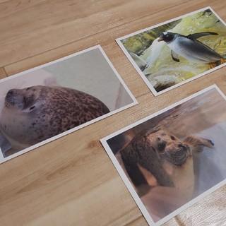ポストカード。3枚1セット(写真/ポストカード)