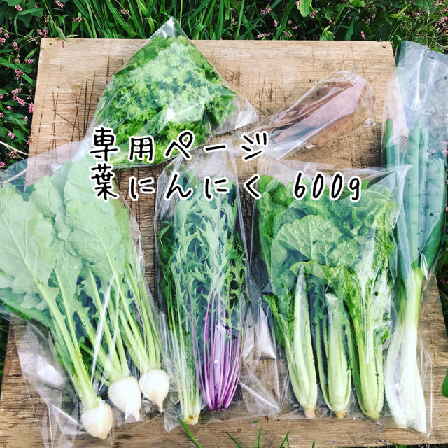 【SALLY様専用】葉にんにく600g 食品/飲料/酒の食品(野菜)の商品写真