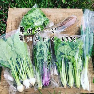 【SALLY様専用】葉にんにく600g(野菜)