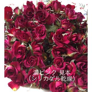 ミニバラ 濃ピンク ドライフラワー★シリカゲル乾燥20輪セット★おまけ付き★薔薇(ドライフラワー)