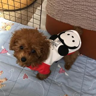 ディズニー(Disney)の犬 服 XS ツムツムミッキー (ペット服/アクセサリー)