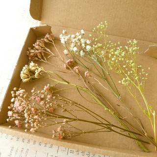 ドライフラワー  小花の花材セット⑥(ドライフラワー)