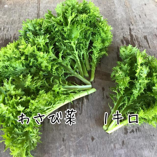 【栽培期間中農薬不使用】わさび菜 1キロ 食品/飲料/酒の食品(野菜)の商品写真
