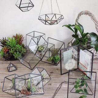 フランフラン(Francfranc)のガラス テラリウム 多肉植物 (プランター)