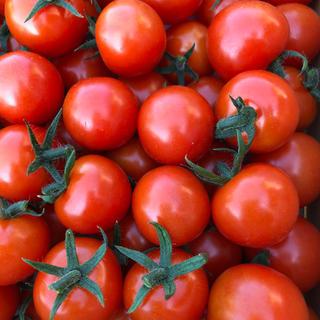 キャロルパッションミニトマト(野菜)