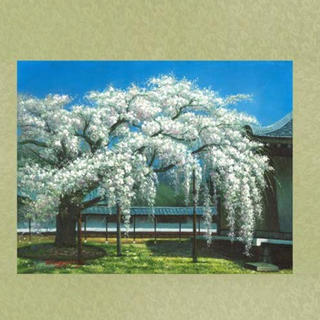 『枝垂れ桜』掛け軸 タペストリー(絵画/タペストリー)