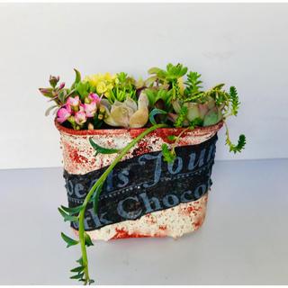 多肉植物 寄せ植えリメ缶 そのまま飾れる(その他)