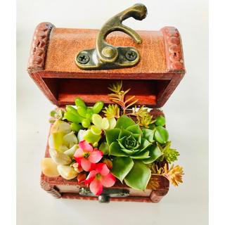 多肉植物 寄せ植え そのまま飾れる宝箱(その他)