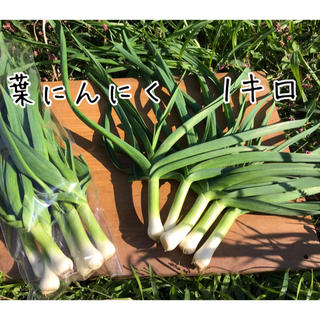【栽培期間中農薬不使用】野菜ソムリエサミット金賞受賞・葉にんにく 1キロ(野菜)