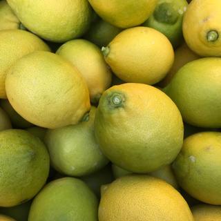 国産レモン5kg
