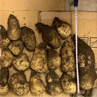 自然薯 無農薬野菜