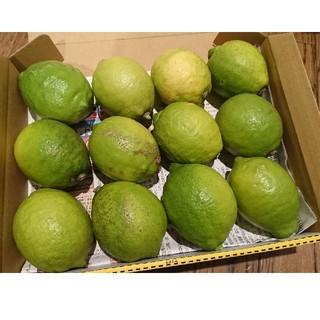 値下げ!広島県大崎下島産 無農薬グリーンレモン 約1.4キロ(フルーツ)