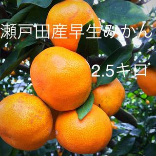 瀬戸田産早生みかん 2.5キロ