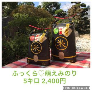 格安☆新米☆大粒☆宮城県産萌えみのり5キロ(米/穀物)