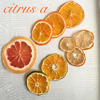 citrus a'   ルビー オレンジ 青みかん mini柚子(ドライフラワー)