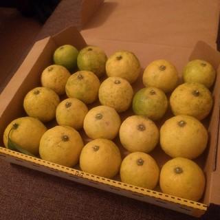 最安値!新鮮 無農薬 柚子 千葉県産 約20個