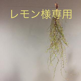 ランプベルジェ正規品 サンダルオイル付き(アロマポット/アロマランプ/芳香器)