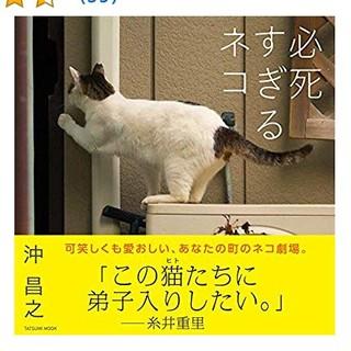 😻新品同様の美品😻  必死すぎるネコ