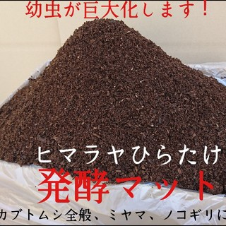 送料無料!カブトムシ幼虫がビッグに!ヒマラヤひらたけ発酵マット  60リットル(虫類)