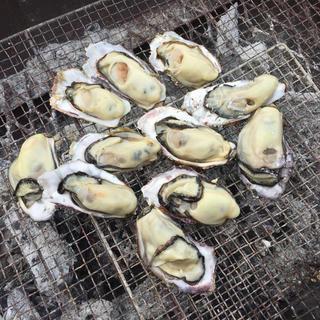 本場 広島県産 殻付き牡蠣 20個 朝採れ直送便(魚介)
