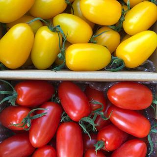 フルーツトマトアイコ セット(野菜)