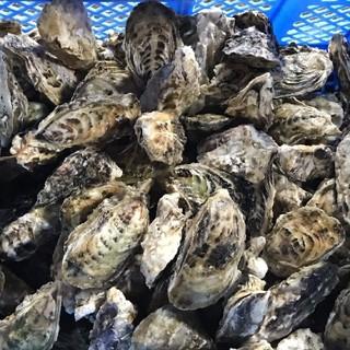 福岡県産 殻付き 牡蠣5㎏(魚介)
