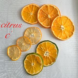 citrus c'(ドライフラワー)