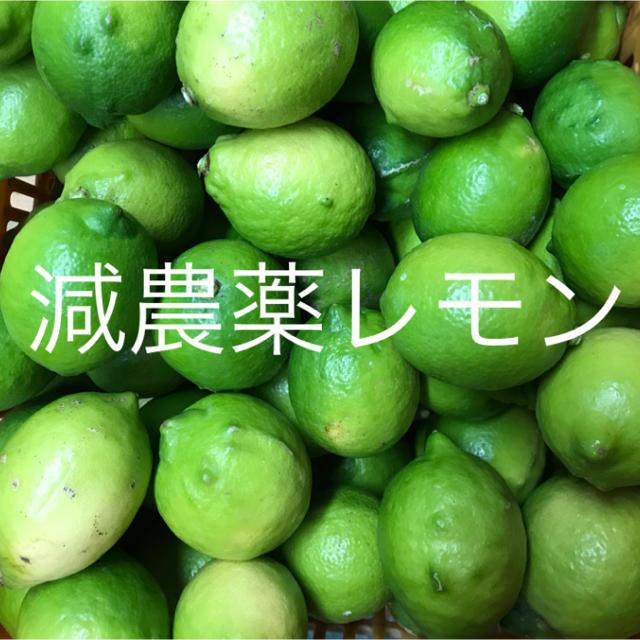 国産レモン  2.5キロ 食品/飲料/酒の食品(フルーツ)の商品写真