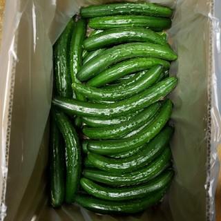 【熊本産】超曲がりきゅうり4・8㎏!お徳用!プロが作る本物の味を堪能してください(野菜)