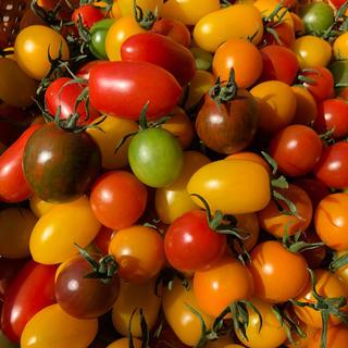 カラーミニトマト (野菜)
