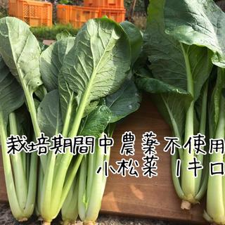 【栽培期間中農薬不使用】小松菜1キロ(野菜)