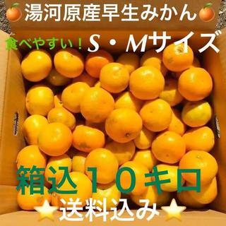 訳あり★産直S・M10kg箱込み★神奈川県湯河原産🍊早生みかん🍊①(フルーツ)