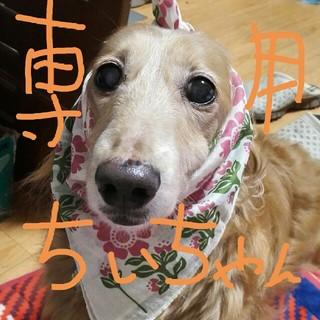 ちぃちゃん専用(犬)