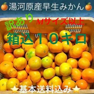 訳あり★産直不揃い10kg箱込み★神奈川県湯河原産🍊早生みかん🍊②(フルーツ)