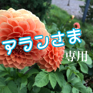 1×8いこうよ! DVD(お笑い/バラエティ)