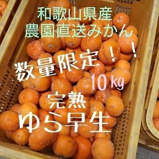 和歌山県産 完熟ゆら早生 10㎏ 農園直送!!(フルーツ)