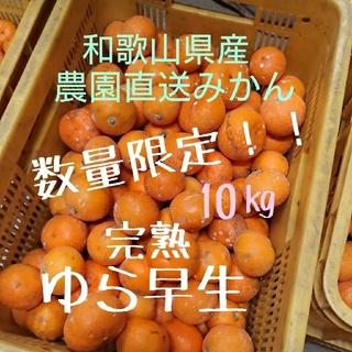 和歌山県産 完熟ゆら早生10㎏ 農園直送! (フルーツ)