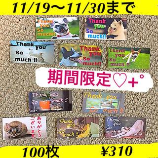 サンキューシール★犬 猫セット★+°(宛名シール)