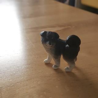 ミニチュア犬(ミニチュア)