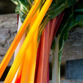 スイスチャードmix 種子 25粒(野菜)