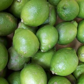 国産無農薬 グリーンレモン 5kg 送料無料(フルーツ)
