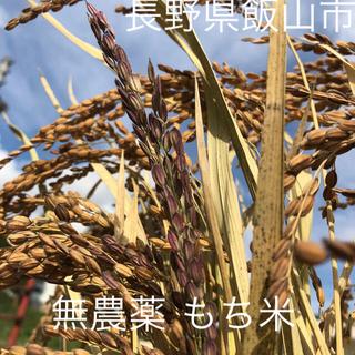 新米 1kg 赤穂もち 無農薬 ピロール農法  長野県産 飯山 糯 餅 もち(米/穀物)