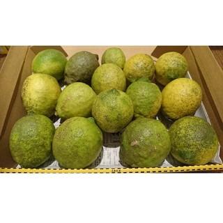 訳あり!広島県大崎下島産 無農薬グリーンレモン約1.5キロ(フルーツ)