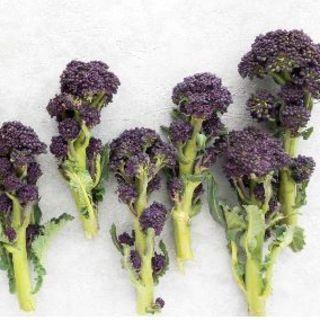 茎ブロッコリー種子(パープル+グリーン)計25粒(野菜)
