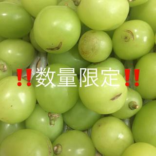 訳あり 長野県産 シャインマスカット 800g 粒