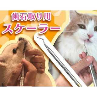 ペット用歯石取り★今ならおまけ付き★(小動物)
