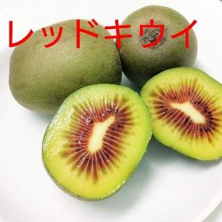 キウイフルーツ【レッドキウイ】約1キロ